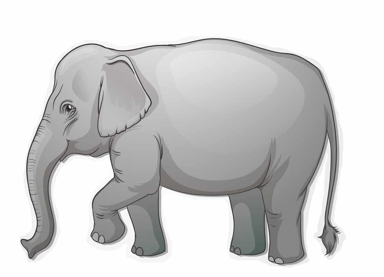 Elefant-1.jpg